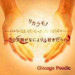 Chicago Poodle - Kimi no Egao ga Nani Yori mo Sukidatta